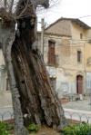 Lledoner en una plaça de la vila